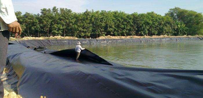 Bạt HDPE Chống Thấm Cho Hồ Tôm, Hồ Cá, Hồ Thủy Sản